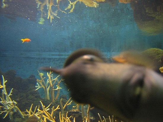 Φωτογραφία της ημέρας: Ψάρι κάνει Photobombing