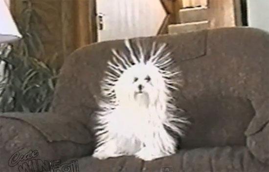 Σκύλος + Στατικός ηλεκτρισμός