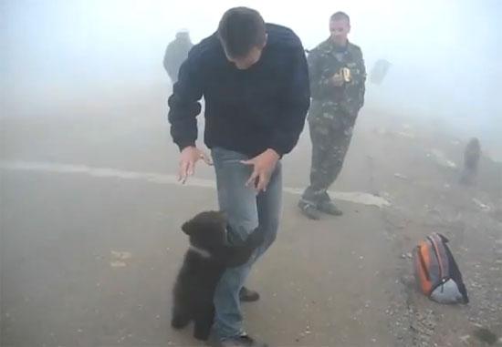Χαριτωμένη επίθεση αρκούδας