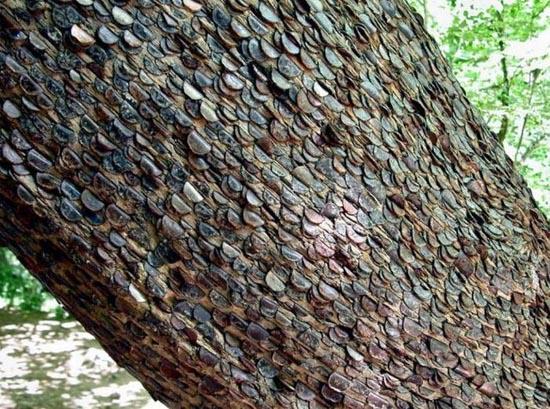 Το δένδρο των κερμάτων που φέρνει καλή τύχη (3)