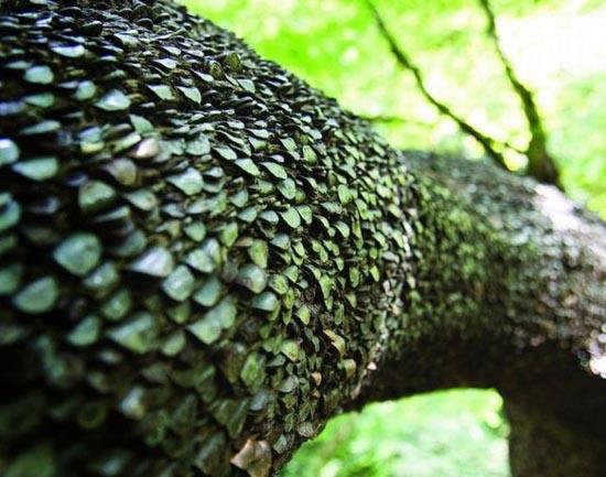 Το δένδρο των κερμάτων που φέρνει καλή τύχη (4)
