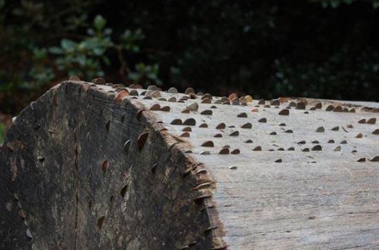 Το δένδρο των κερμάτων που φέρνει καλή τύχη (11)
