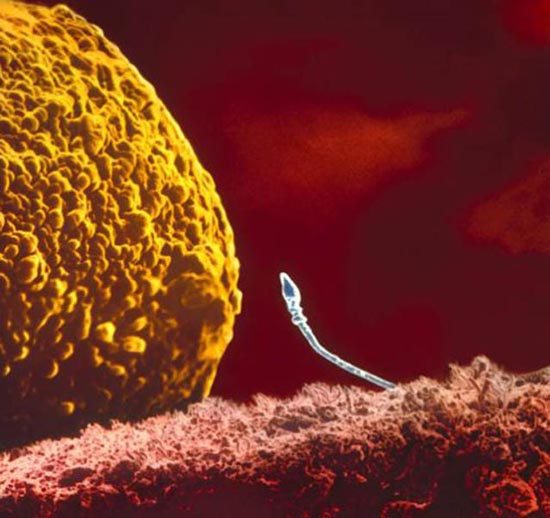 Η διαδικασία γονιμοποίησης σε συγκλονιστικές macro φωτογραφίες (3)