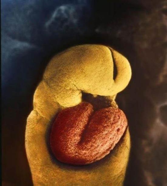 Η διαδικασία γονιμοποίησης σε συγκλονιστικές macro φωτογραφίες (11)