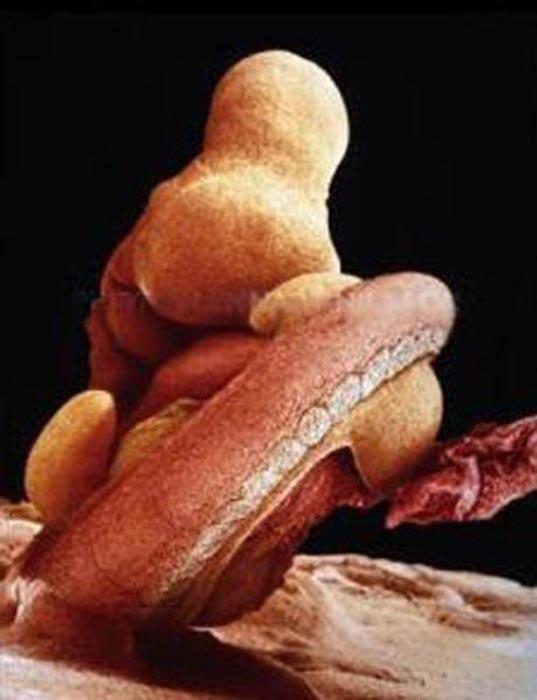 Η διαδικασία γονιμοποίησης σε συγκλονιστικές macro φωτογραφίες (13)
