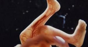 Η διαδικασία γονιμοποίησης & εγκυμοσύνης σε συγκλονιστικές macro φωτογραφίες