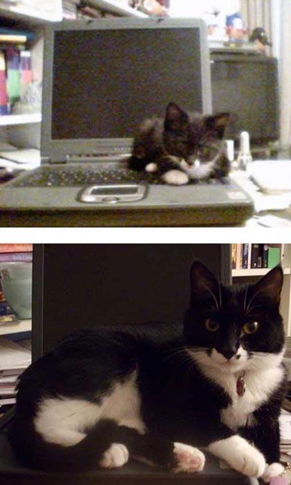 Γάτες τότε και τώρα (15)