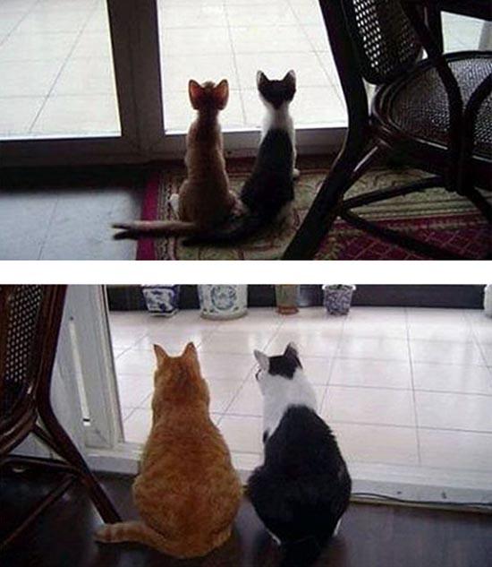 Γάτες τότε και τώρα (13)