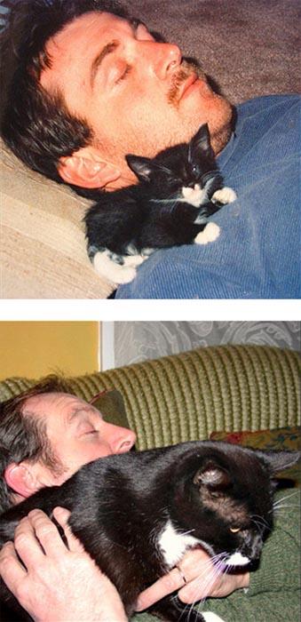 Γάτες τότε και τώρα (12)