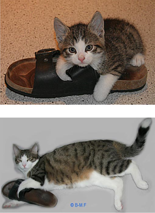 Γάτες τότε και τώρα (11)
