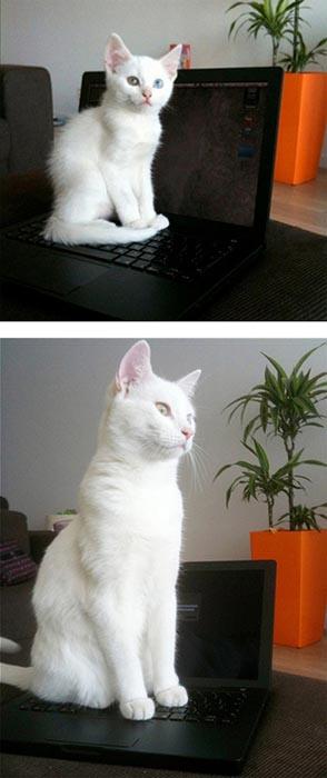 Γάτες τότε και τώρα (9)