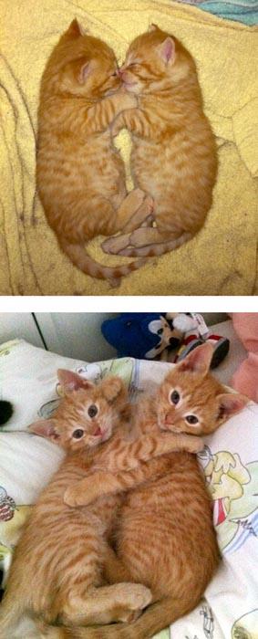 Γάτες τότε και τώρα (8)