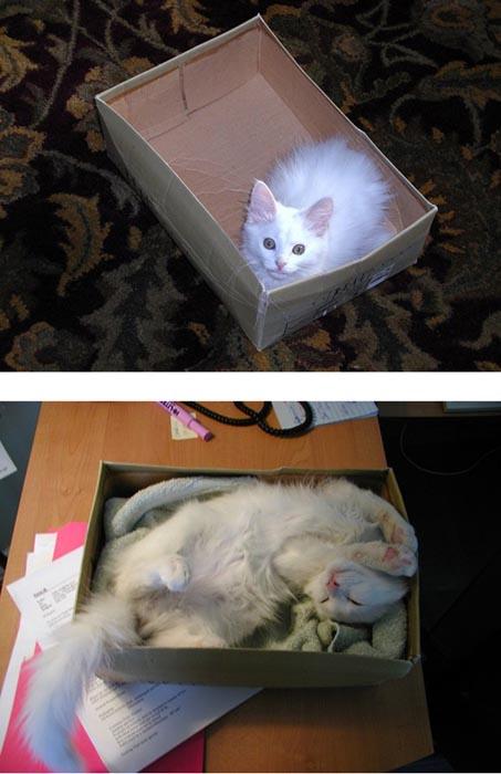 Γάτες τότε και τώρα (7)