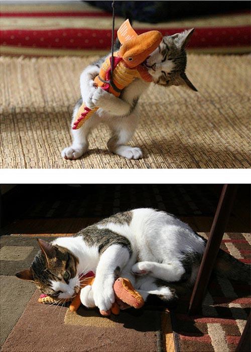 Γάτες τότε και τώρα (6)
