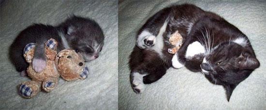 Γάτες τότε και τώρα