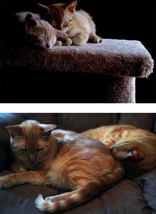 Γάτες τότε και τώρα (4)