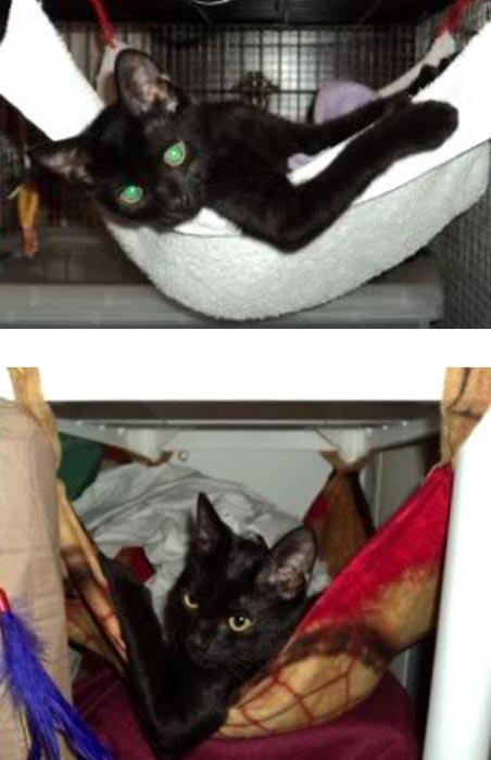 Γάτες τότε και τώρα (3)