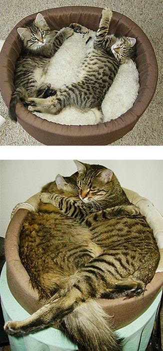 Γάτες τότε και τώρα (2)