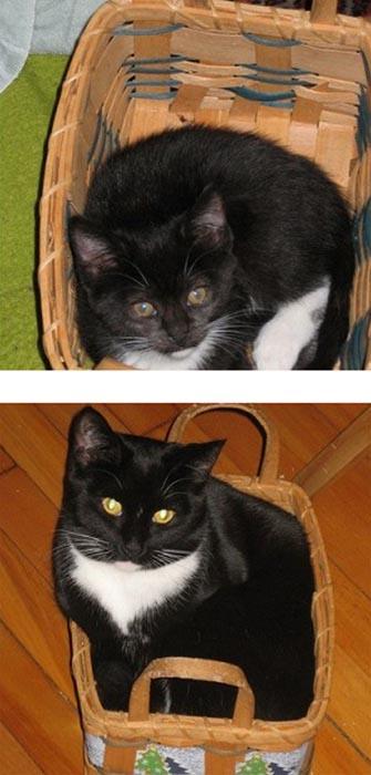 Γάτες τότε και τώρα (1)