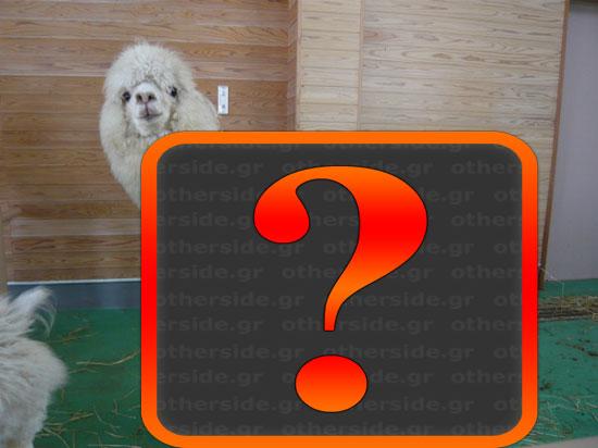Έχετε δει ποτέ γυμνό Alpaca; (1)