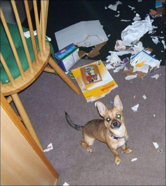 Όταν τα κατοικίδια έχουν καταστροφικές διαθέσεις (25)
