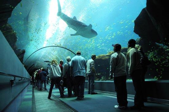 Το μεγαλύτερο ενυδρείο του κόσμου είναι εκπληκτικό (4)