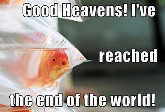 Φωτογραφία της ημέρας: Το ψάρι που έφτασε στην άκρη του κόσμου...