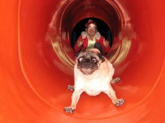Φωτογραφία της ημέρας: Απίστευτη γκριμάτσα σκύλου!