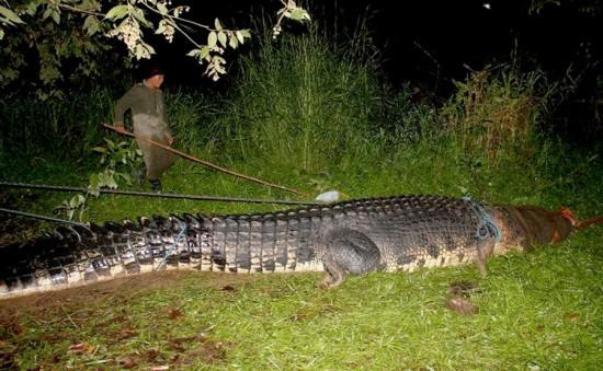Φωτογραφία της ημέρας: Γιγαντιαίος κροκόδειλος 6,5 μέτρων (1)