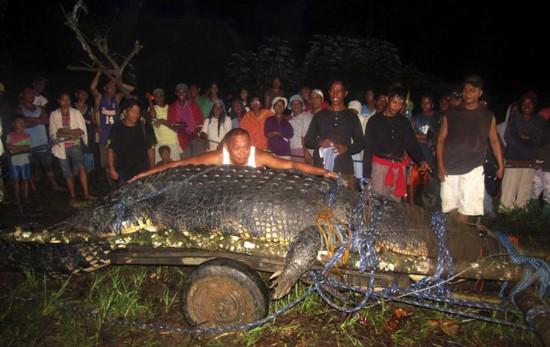 Φωτογραφία της ημέρας: Γιγαντιαίος κροκόδειλος 6,5 μέτρων (2)