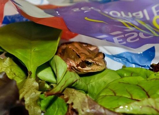 Η σαλάτα έκρυβε μια έκπληξη... (4)