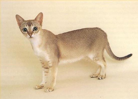 Σπάνιες γάτες απ'όλο το κόσμο (1)