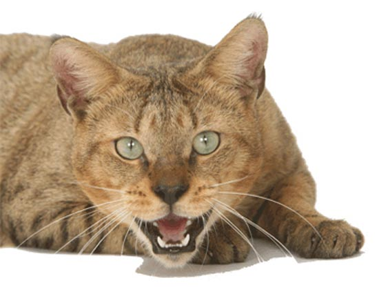 Σπάνιες γάτες απ'όλο το κόσμο (5)