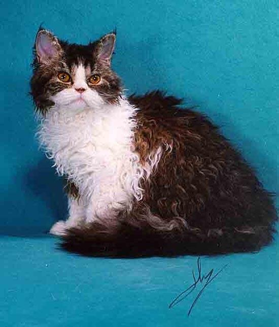 Σπάνιες γάτες απ'όλο το κόσμο (9)