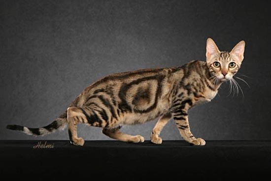 Σπάνιες γάτες απ'όλο το κόσμο (3)