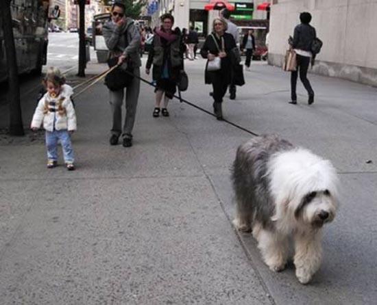 Βόλτα τον σκύλο (1)