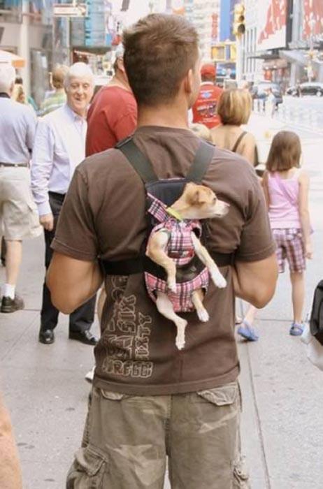 Βόλτα τον σκύλο (2)