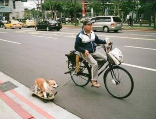 Βόλτα τον σκύλο (3)