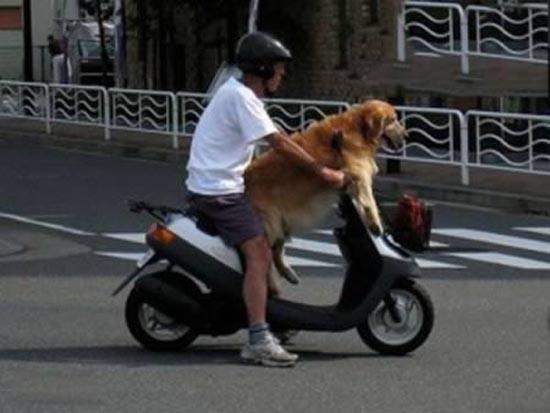 Βόλτα τον σκύλο (7)