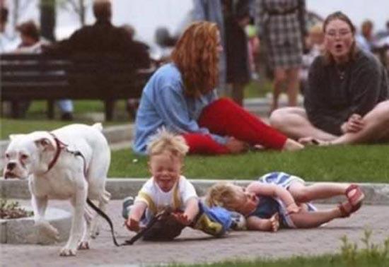 Βόλτα τον σκύλο (8)