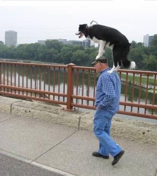 Βόλτα τον σκύλο (11)