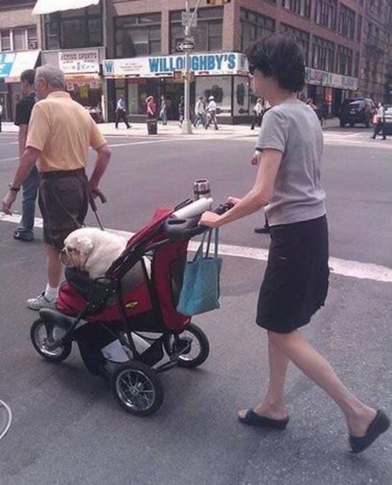 Βόλτα τον σκύλο (12)