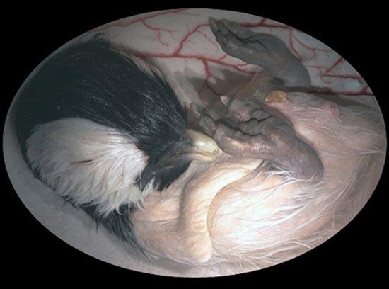 Ζώα μέσα στη μήτρα (3)