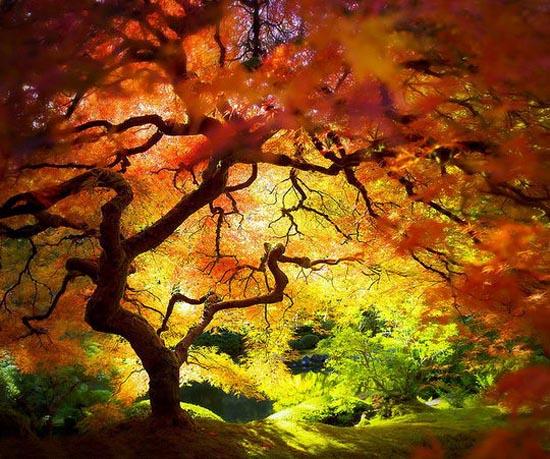 Φθινόπωρο (6)