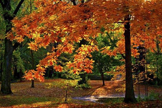 Φθινόπωρο (4)