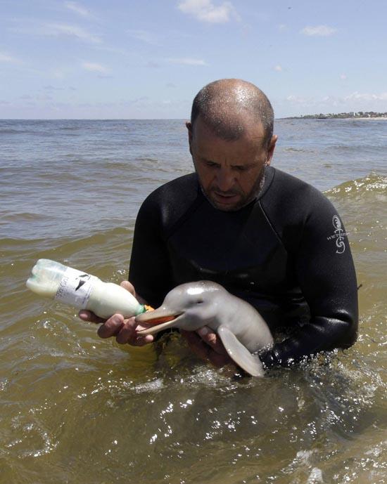 Η διάσωση ενός ορφανού νεαρού δελφινιού (1)
