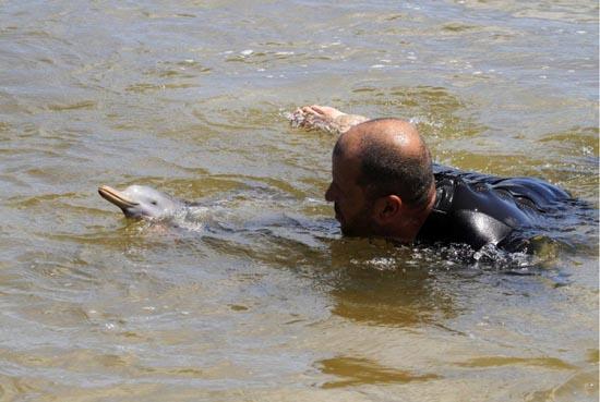 Η διάσωση ενός ορφανού νεαρού δελφινιού (2)