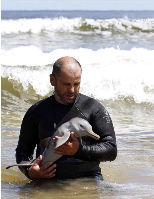 Η διάσωση ενός ορφανού νεαρού δελφινιού (3)