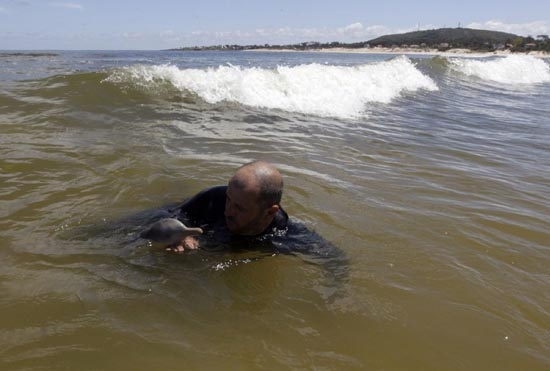 Η διάσωση ενός ορφανού νεαρού δελφινιού (4)