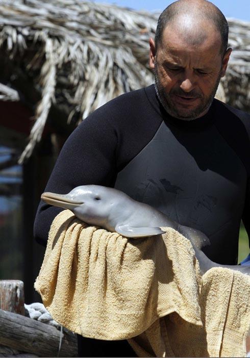 Η διάσωση ενός ορφανού νεαρού δελφινιού (5)